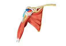 Shoulder Subacromial Decompression